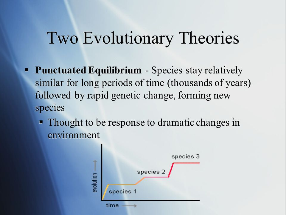 Two Evolutionary Theories Punctuated Equilibrium - Species stay relatively similar for long periods of time (thousands of years) followed by rapid genetic change, forming new species Thought to be response to dramatic changes in environment Punctuated Equilibrium - Species stay relatively similar for long periods of time (thousands of years) followed by rapid genetic change, forming new species Thought to be response to dramatic changes in environment