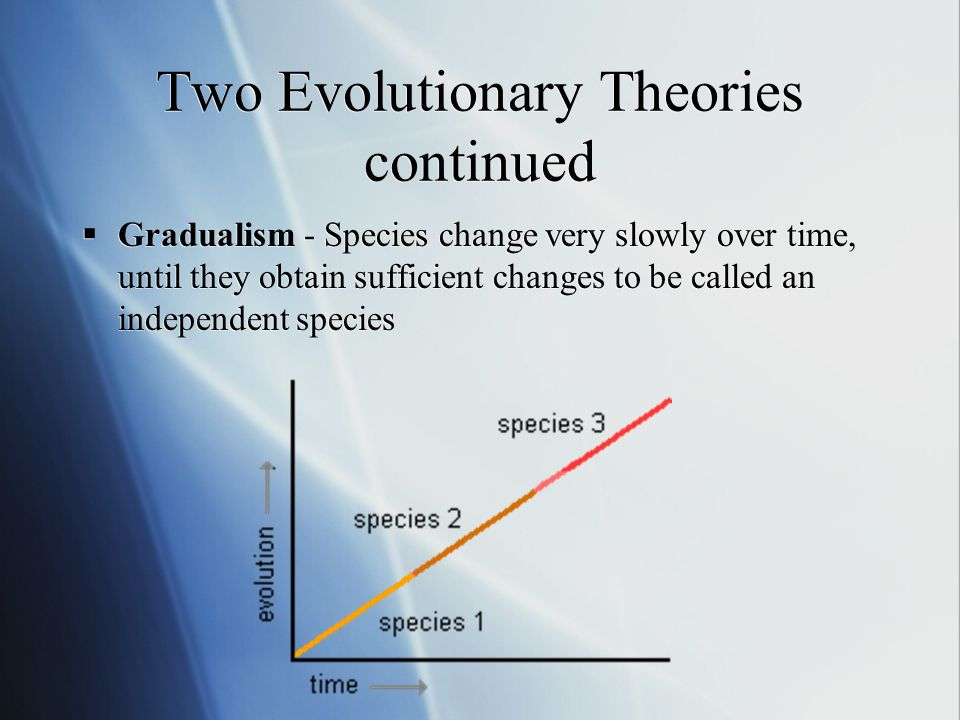 Two Evolutionary Theories continued Gradualism - Species change very slowly over time, until they obtain sufficient changes to be called an independent species