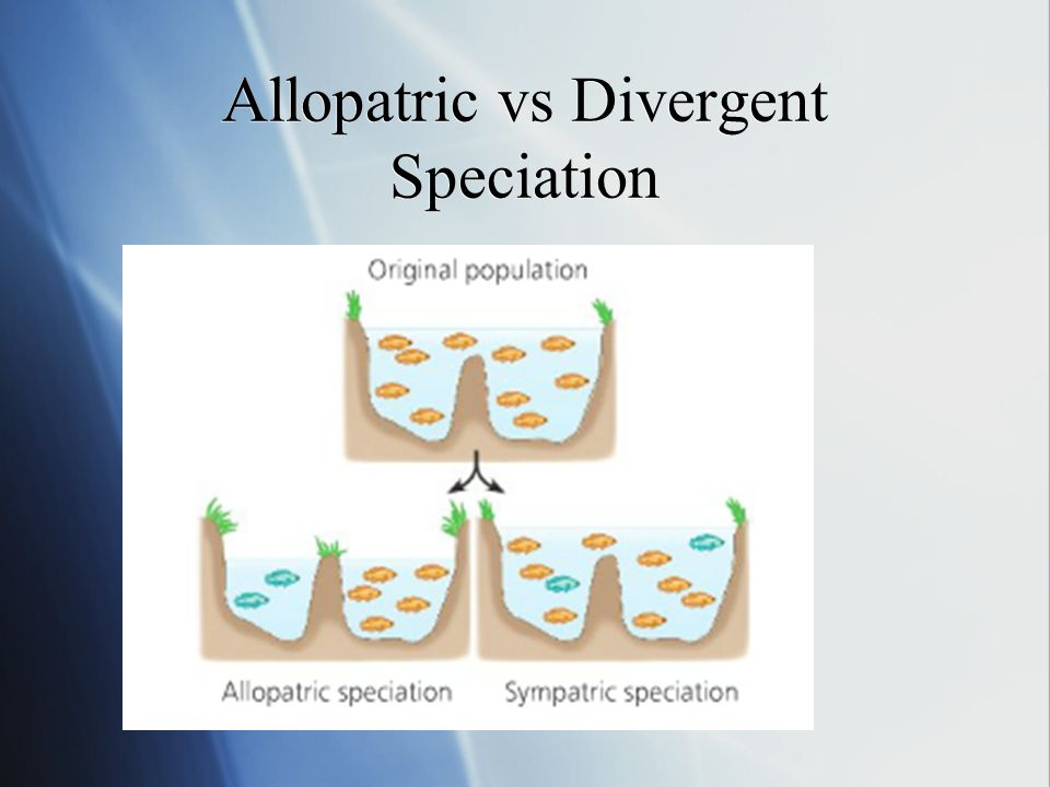Allopatric vs Divergent Speciation