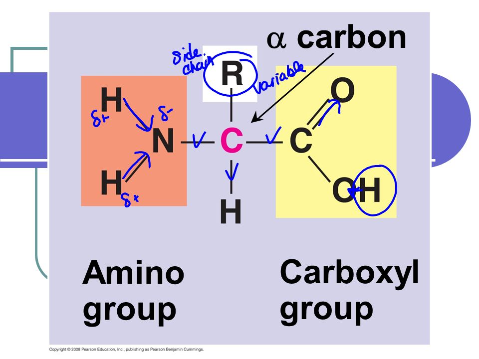 Fig. 5-UN1 Amino group Carboxyl group carbon