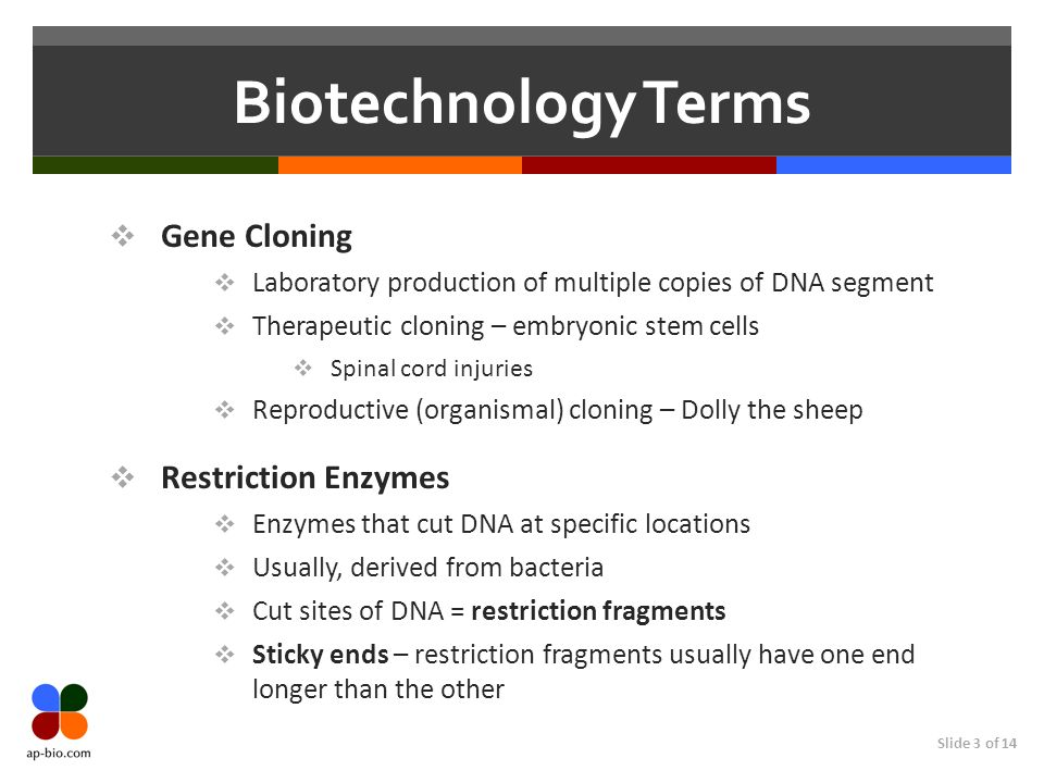 Slide 3 of 14 Biotechnology Terms Gene Cloning Laboratory production of multiple copies of DNA segment Therapeutic cloning – embryonic stem cells Spinal cord injuries Reproductive (organismal) cloning – Dolly the sheep Restriction Enzymes Enzymes that cut DNA at specific locations Usually, derived from bacteria Cut sites of DNA = restriction fragments Sticky ends – restriction fragments usually have one end longer than the other