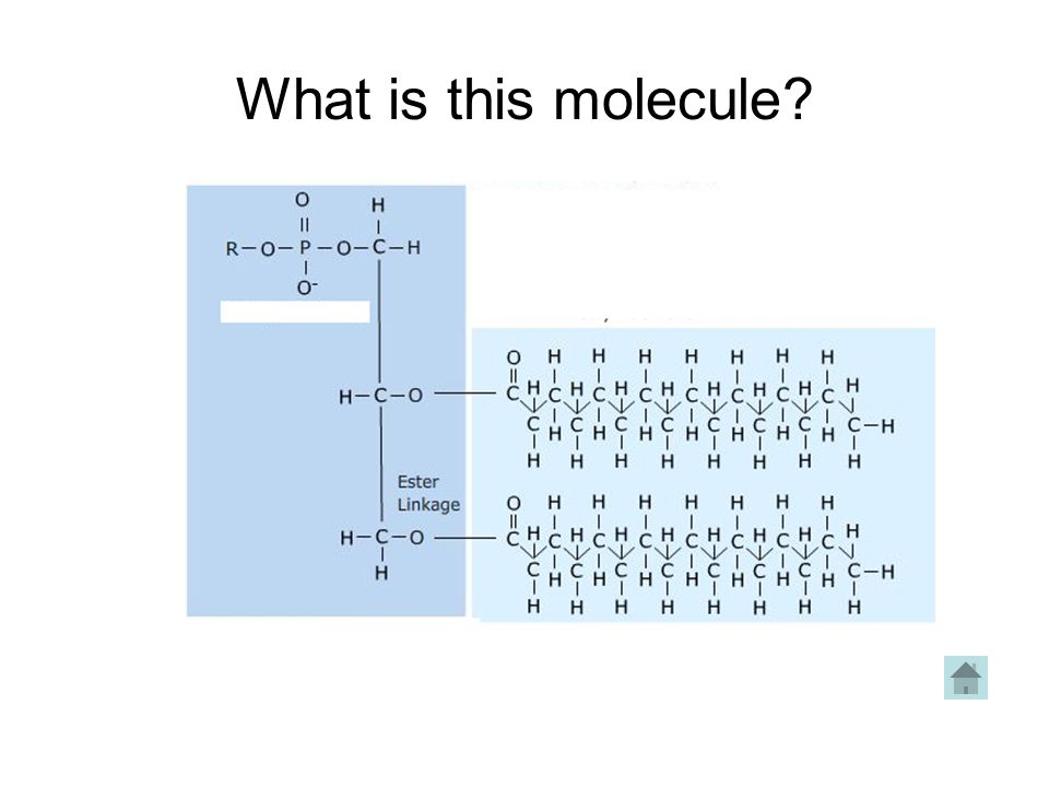 What is this molecule