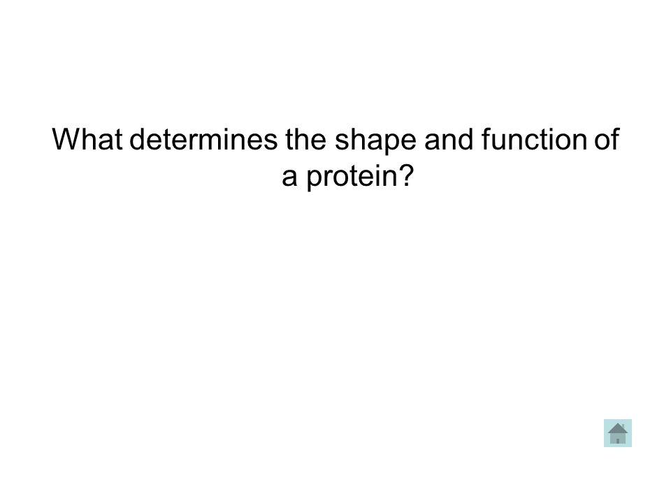 What determines the shape and function of a protein