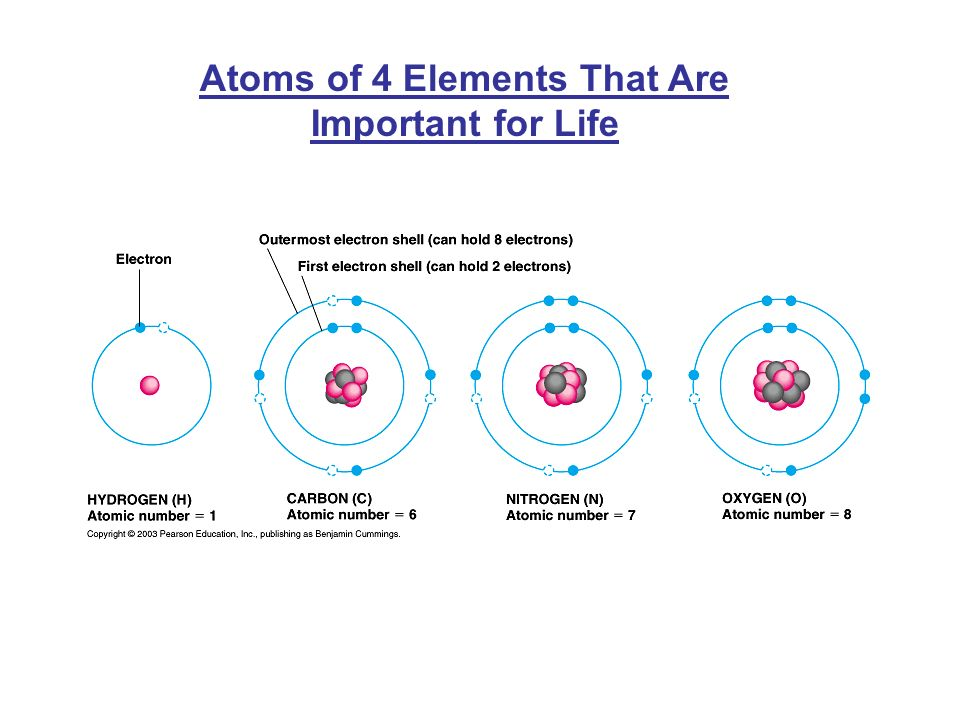Atoms of 4 Elements That Are Important for Life