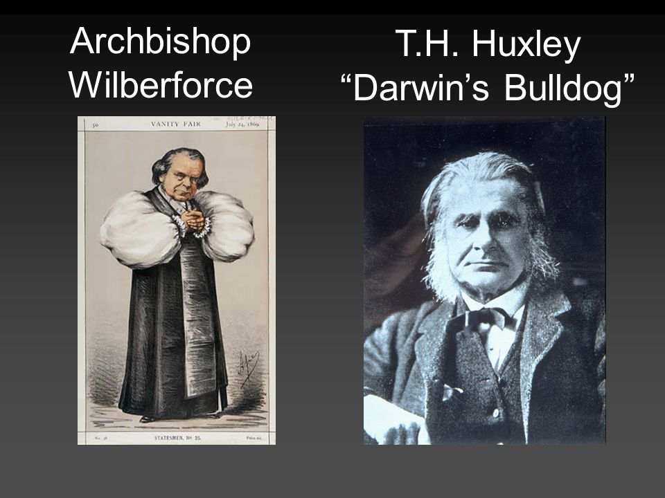 Archbishop Wilberforce T.H. Huxley Darwins Bulldog