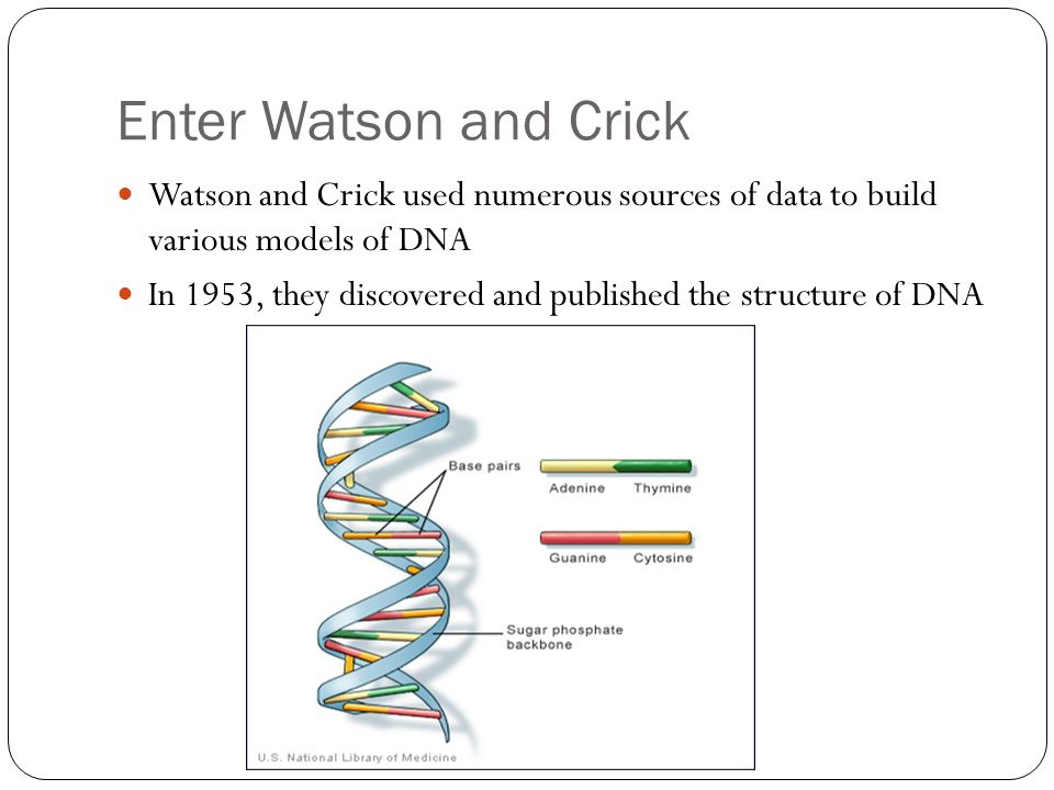 Enter Watson and Crick Watson and Crick used numerous sources of data to build various models of DNA In 1953, they discovered and published the structure of DNA
