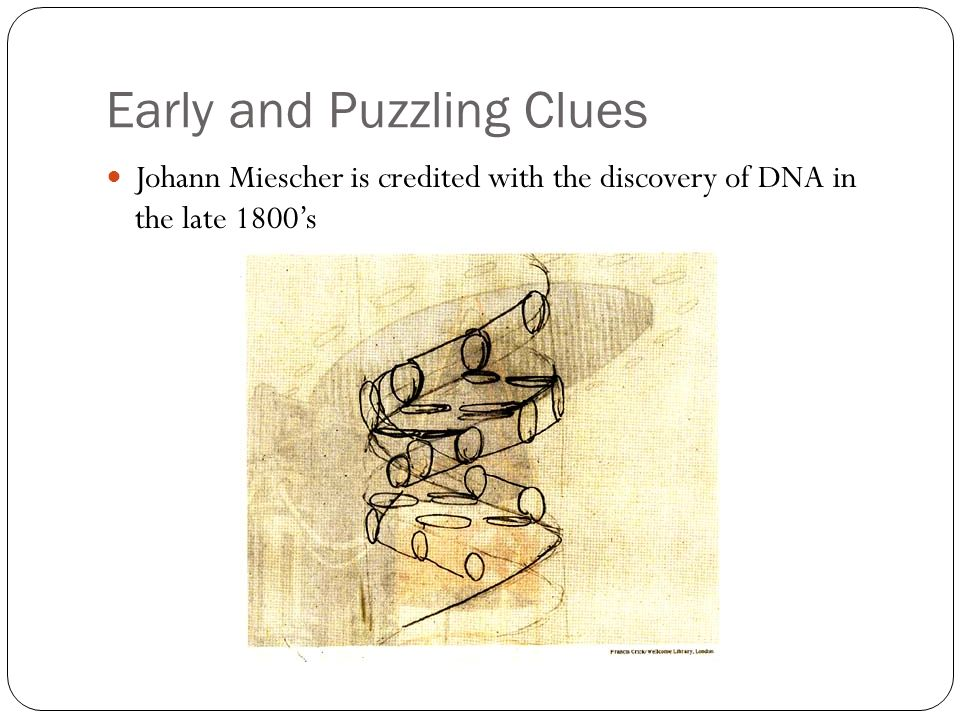 Early and Puzzling Clues Johann Miescher is credited with the discovery of DNA in the late 1800s