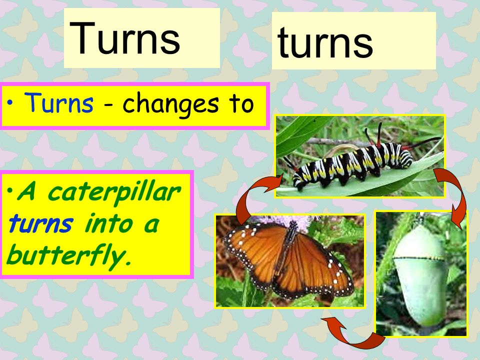 Turns Turns - changes to turns A caterpillar turns into a butterfly.
