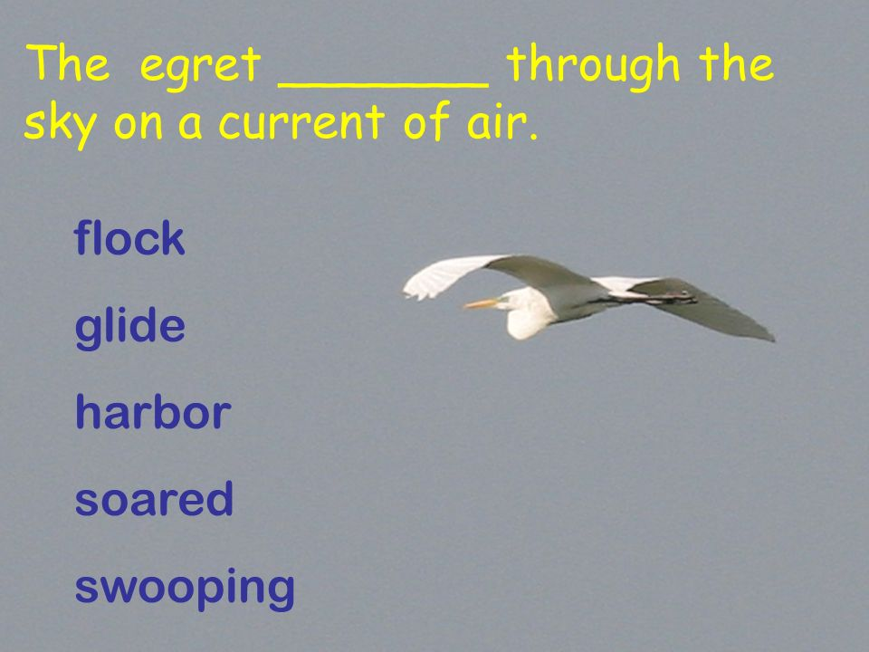 The egret _______ through the sky on a current of air. flock glide harbor soared swooping
