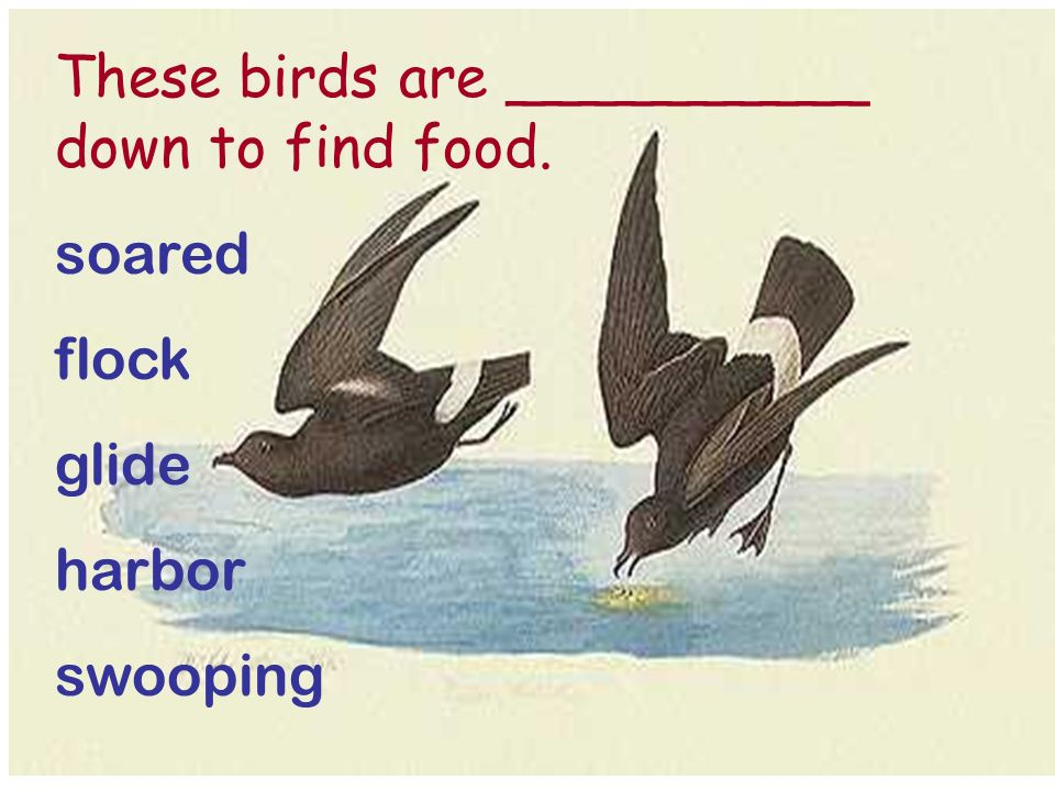 These birds are __________ down to find food. soared flock glide harbor swooping