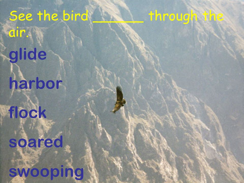 See the bird ______ through the air. glide harbor flock soared swooping