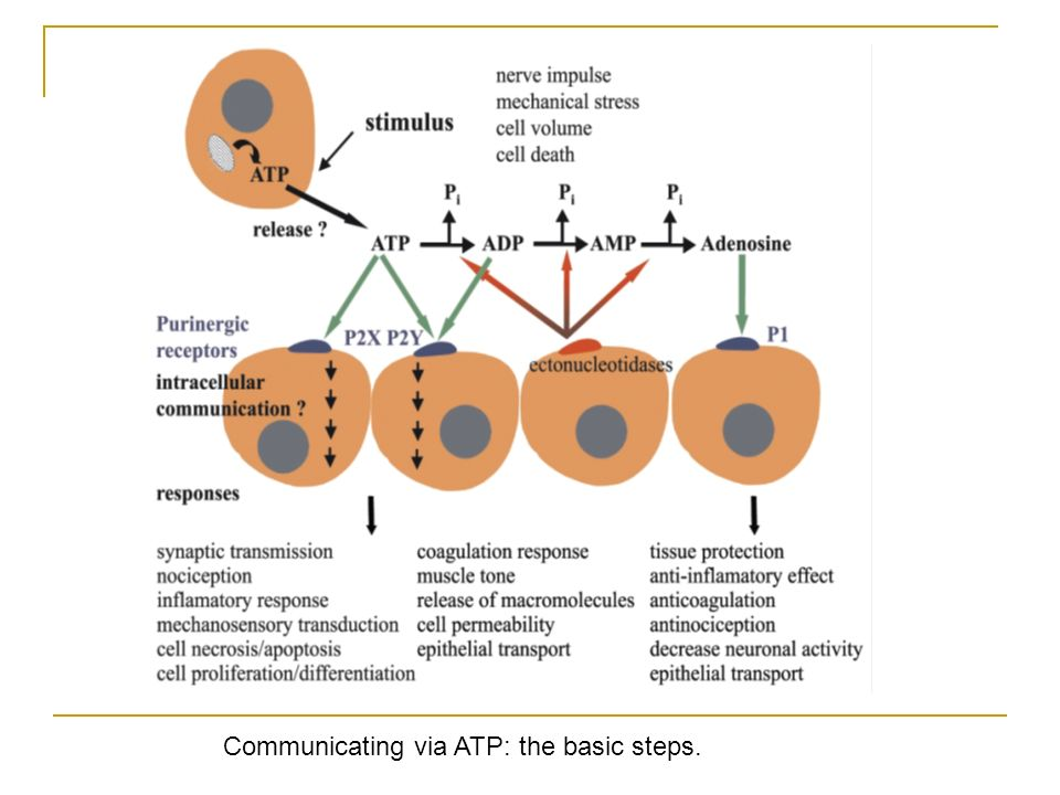 Communicating via ATP: the basic steps.