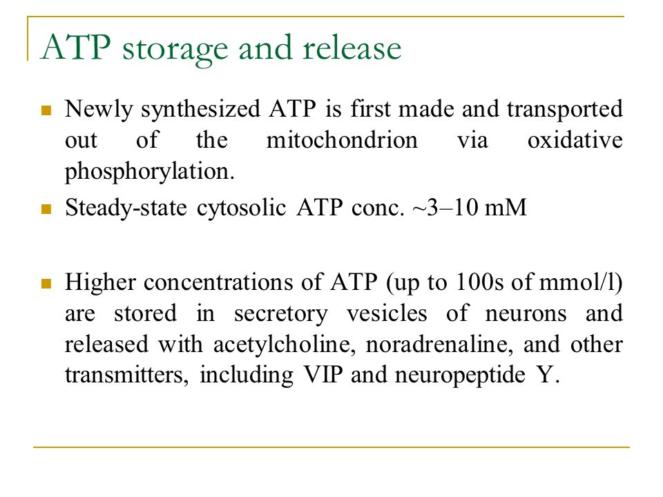 ATP storage and release Newly synthesized ATP is first made and transported out of the mitochondrion via oxidative phosphorylation.