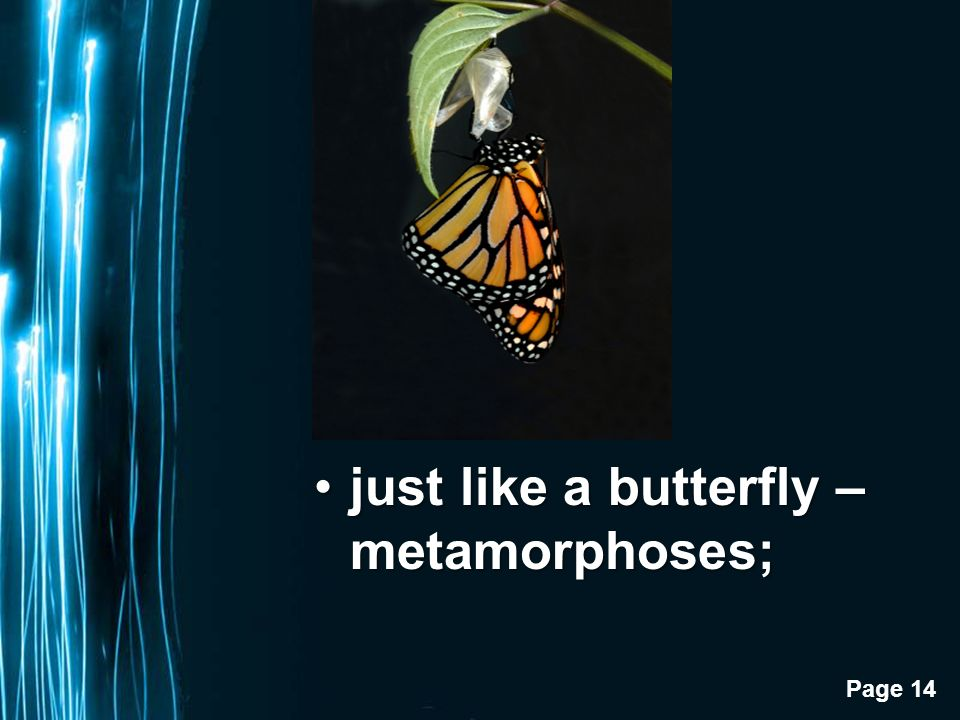 Page 14 just like a butterfly – metamorphoses;just like a butterfly – metamorphoses;