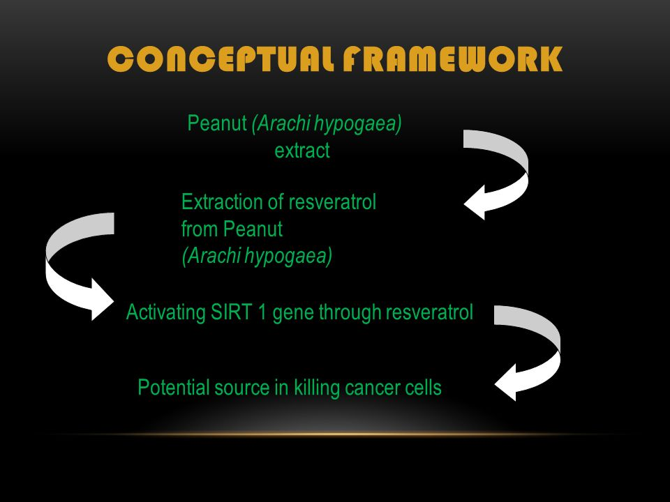 CONCEPTUAL FRAMEWORK Extraction of resveratrol from Peanut (Arachi hypogaea) Peanut (Arachi hypogaea) extract Activating SIRT 1 gene through resveratrol Potential source in killing cancer cells