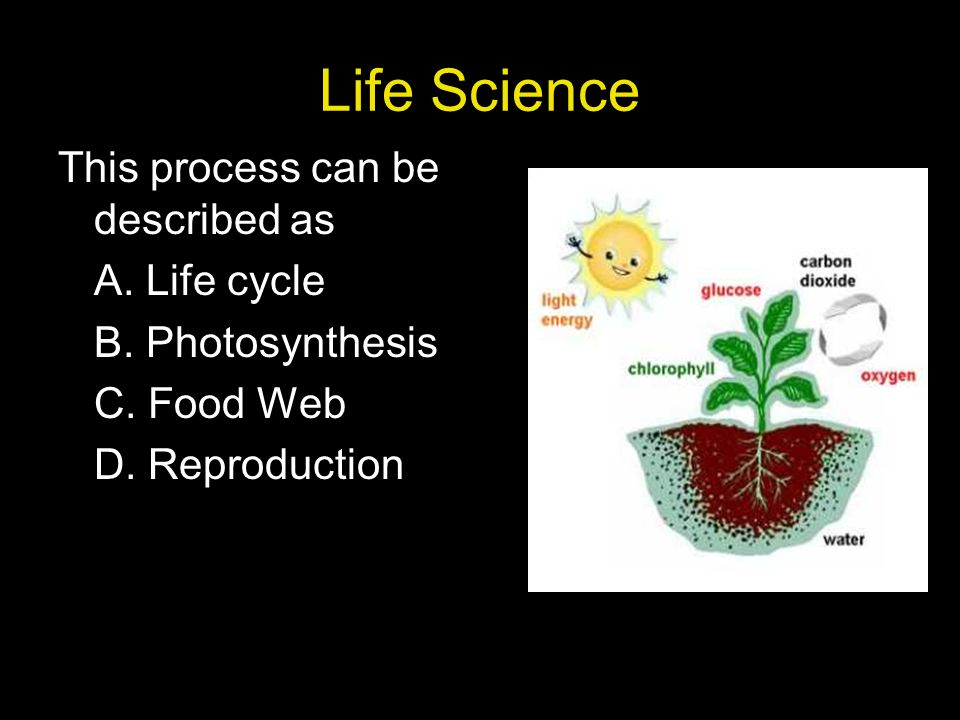 Life Science This process can be described as A. Life cycle B.