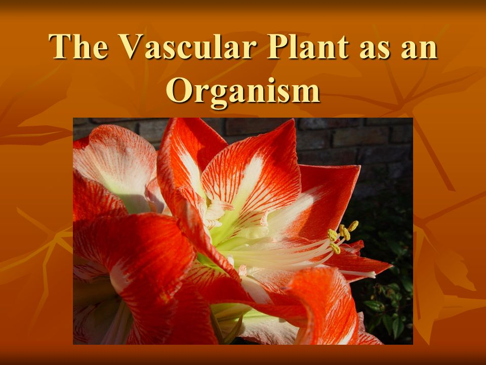 The Vascular Plant as an Organism