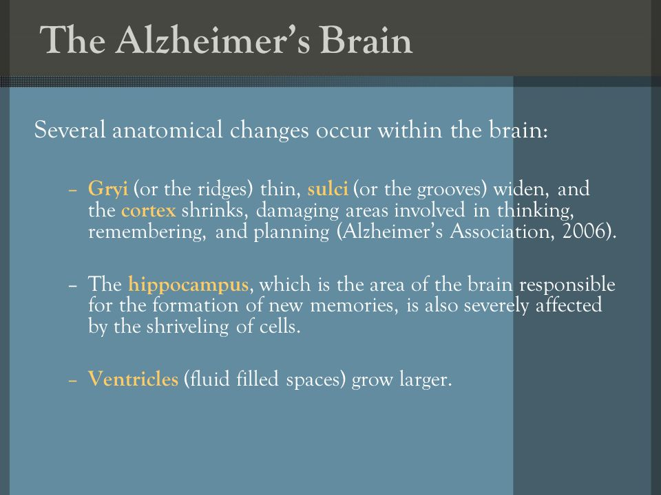 The Alzheimers Brain Several anatomical changes occur within the brain: – Gryi (or the ridges) thin, sulci (or the grooves) widen, and the cortex shrinks, damaging areas involved in thinking, remembering, and planning (Alzheimers Association, 2006).