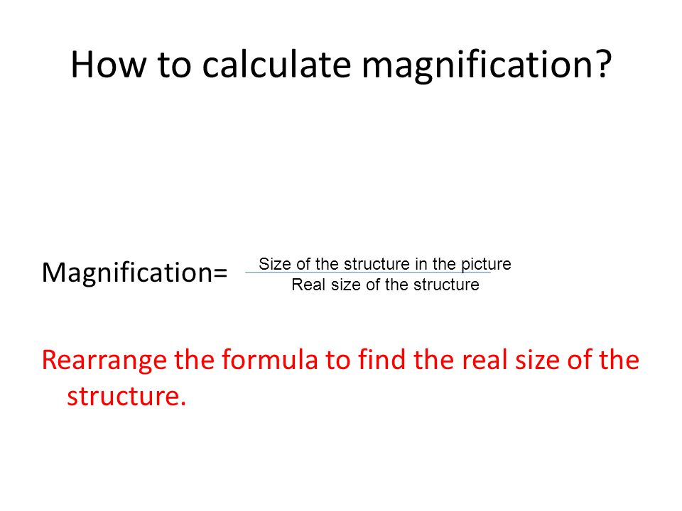 How to calculate magnification.