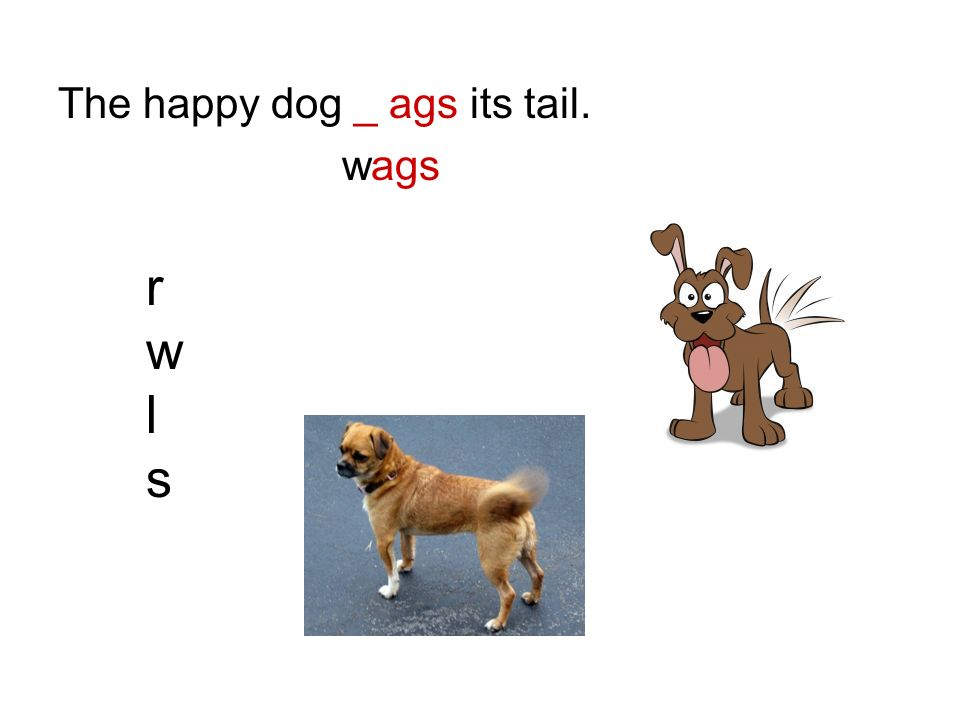 The happy dog _ ags its tail. wags rwlsrwls