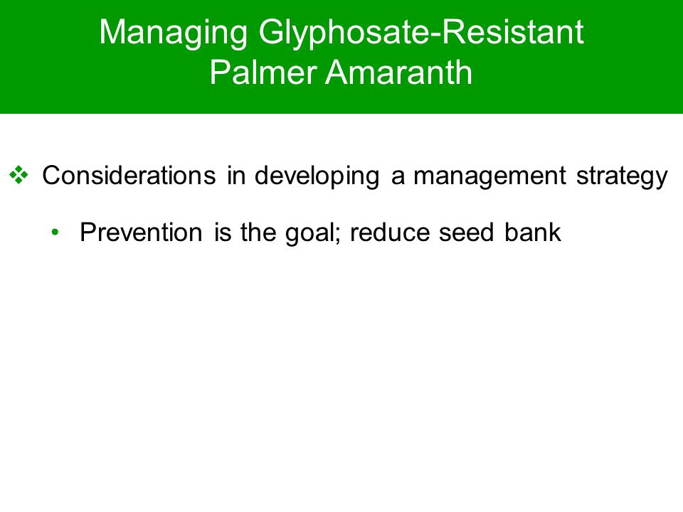 Managing Glyphosate-Resistant Palmer Amaranth Considerations in developing a management strategy Prevention is the goal; reduce seed bank