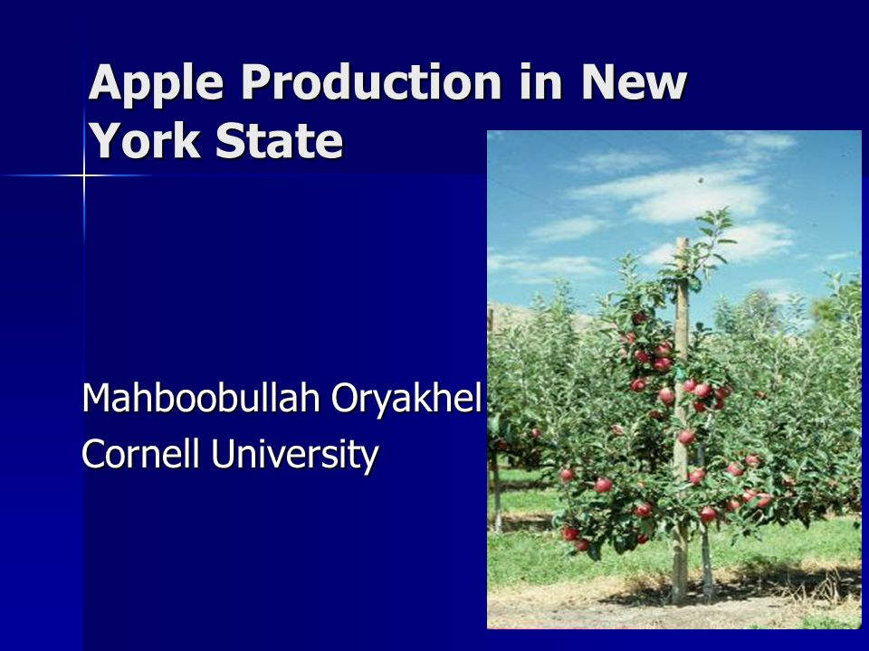 Apple Production in New York State Mahboobullah Oryakhel Cornell University