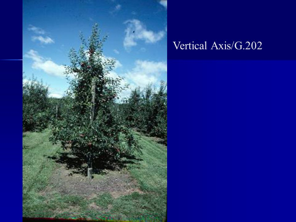 Vertical Axis/G.202