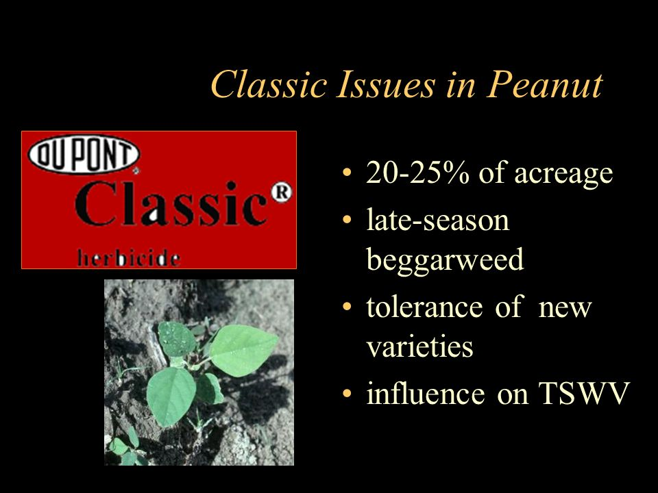 Classic Issues in Peanut 20-25% of acreage late-season beggarweed tolerance of new varieties influence on TSWV