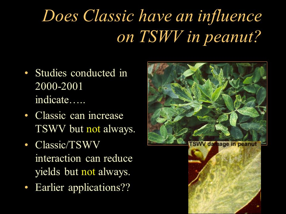 Does Classic have an influence on TSWV in peanut. Studies conducted in 2000-2001 indicate…..