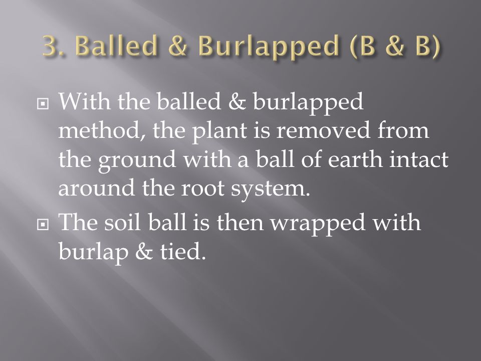 With the balled & burlapped method, the plant is removed from the ground with a ball of earth intact around the root system.
