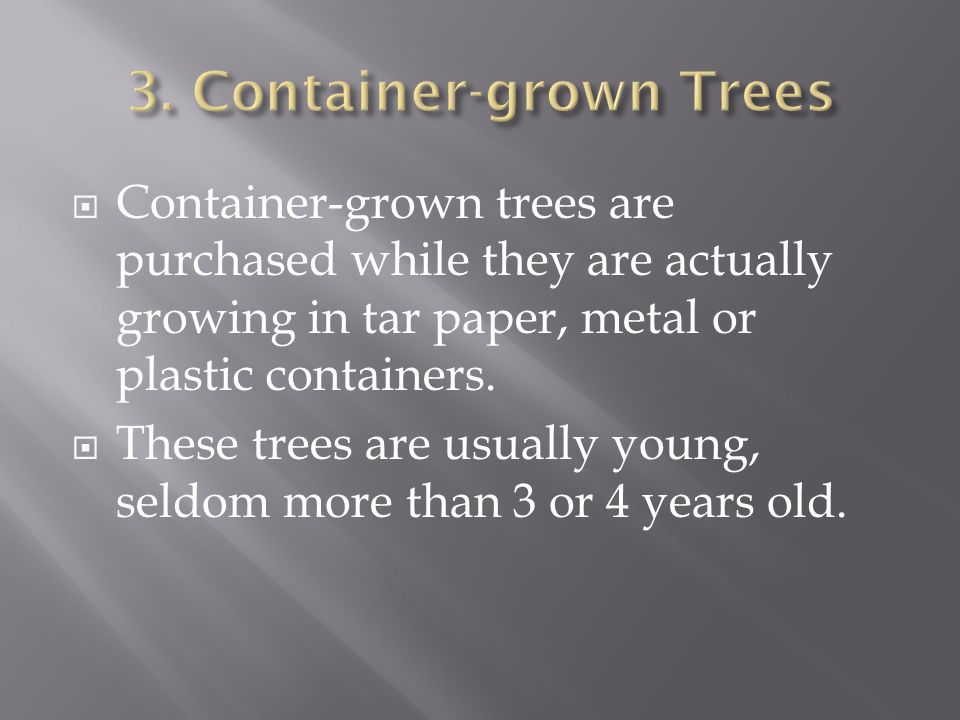Container-grown trees are purchased while they are actually growing in tar paper, metal or plastic containers.