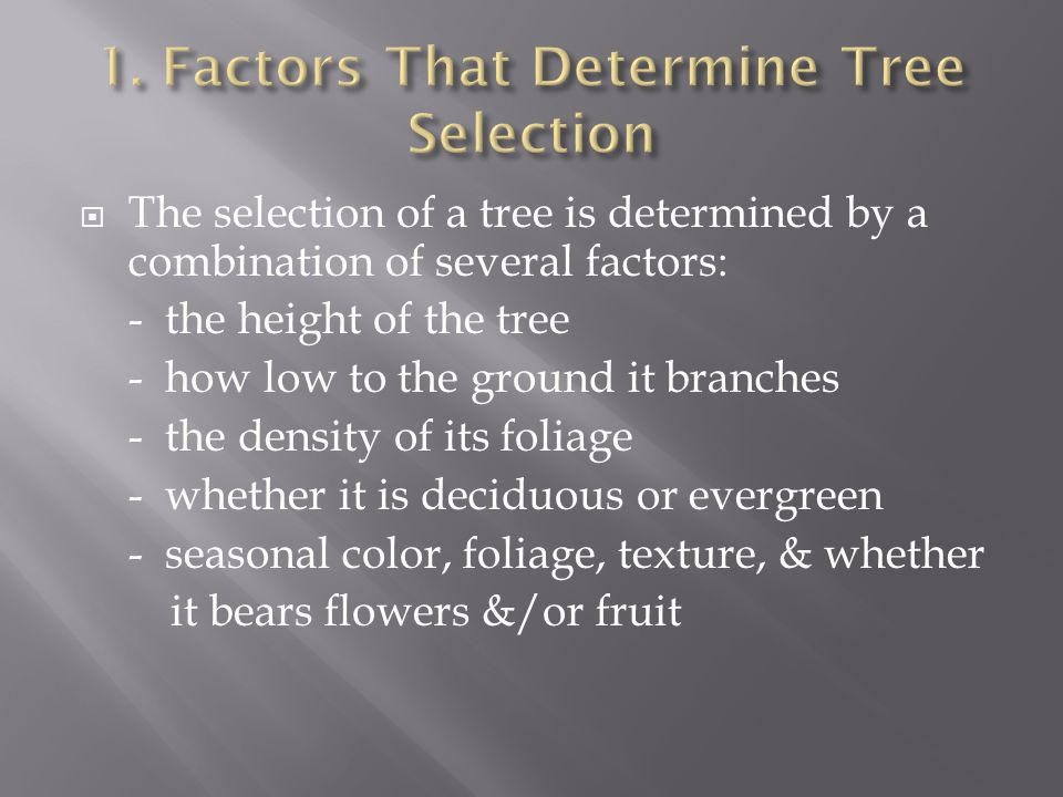 The selection of a tree is determined by a combination of several factors: - the height of the tree - how low to the ground it branches - the density of its foliage - whether it is deciduous or evergreen - seasonal color, foliage, texture, & whether it bears flowers &/or fruit