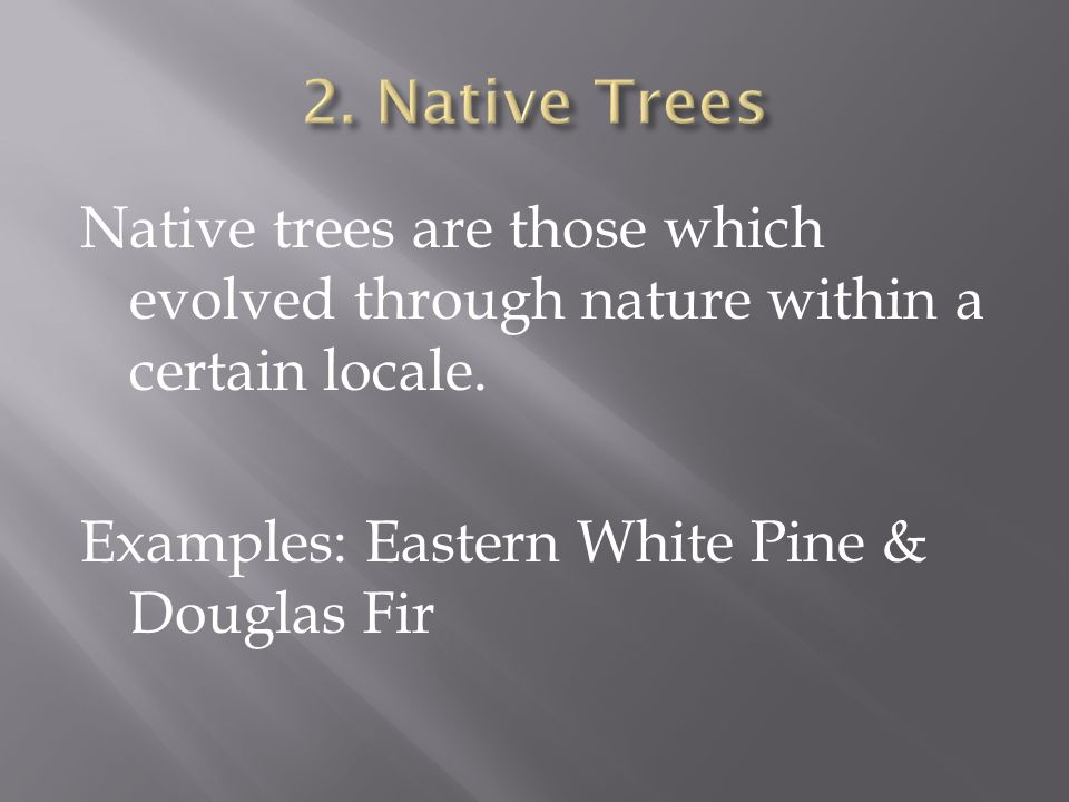 Native trees are those which evolved through nature within a certain locale.