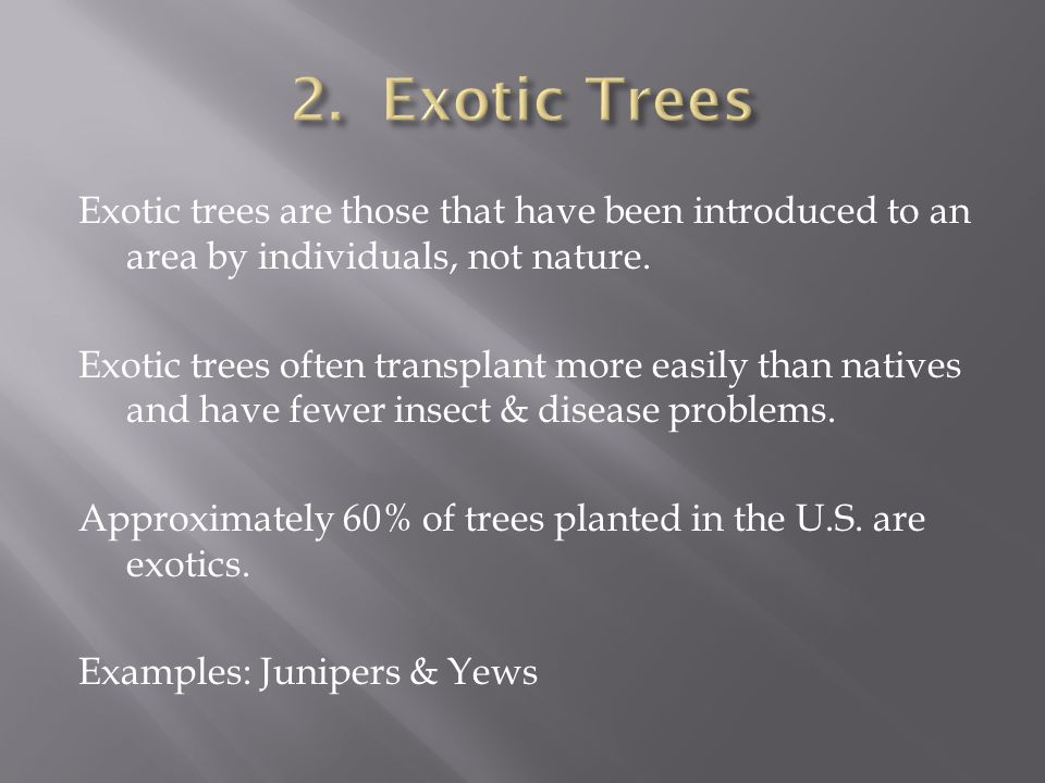 Exotic trees are those that have been introduced to an area by individuals, not nature.