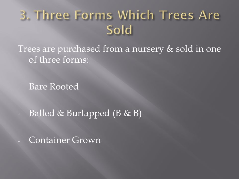 Trees are purchased from a nursery & sold in one of three forms: - Bare Rooted - Balled & Burlapped (B & B) - Container Grown