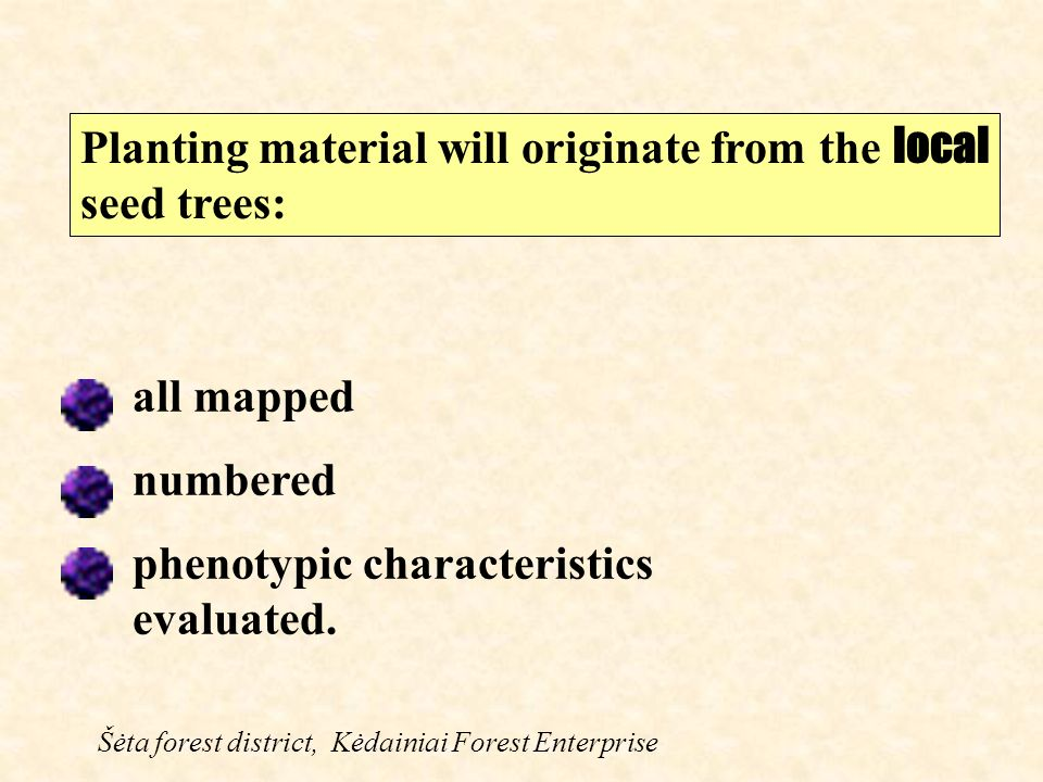 Planting material will originate from the local seed trees: Šėta forest district, Kėdainiai Forest Enterprise all mapped numbered phenotypic characteristics evaluated.