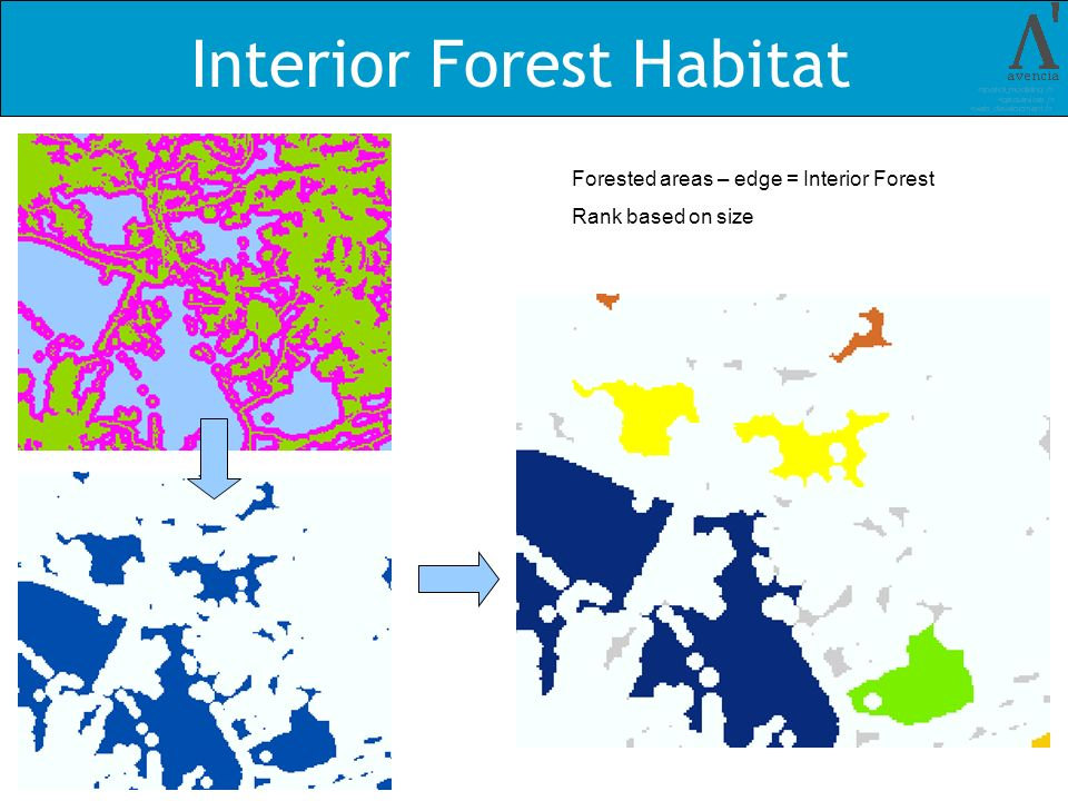 Interior Forest Habitat Forested areas – edge = Interior Forest Rank based on size