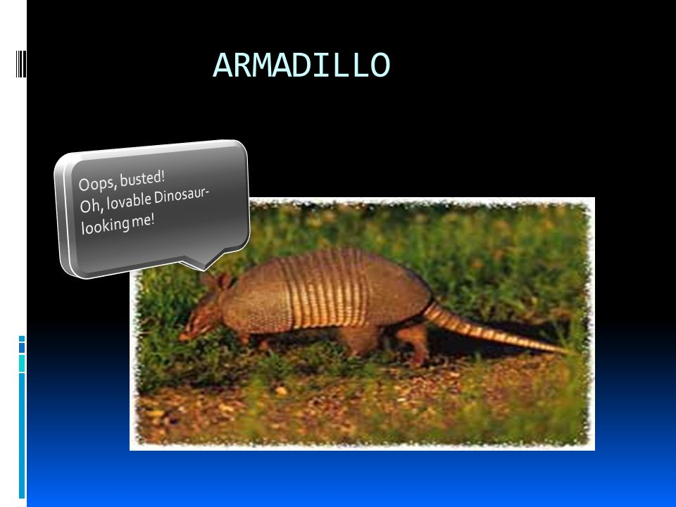 ENZOOTIC LEPROSY-ARMADILLO cont Other M.