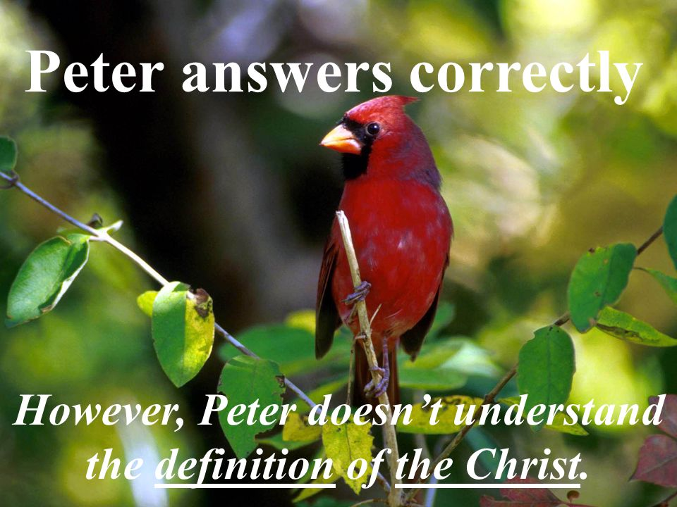 Peter answers correctly However, Peter doesnt understand the definition of the Christ.