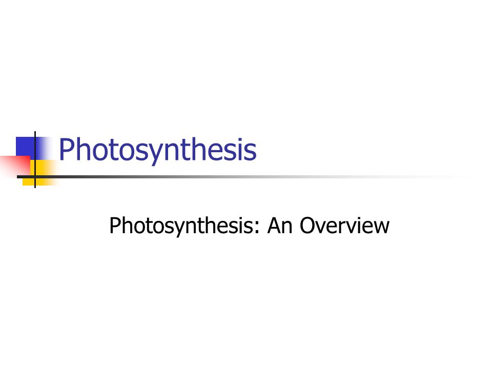 Photosynthesis Photosynthesis: An Overview