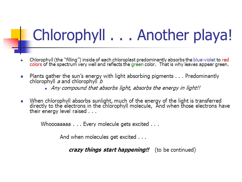 Chlorophyll... Another playa.