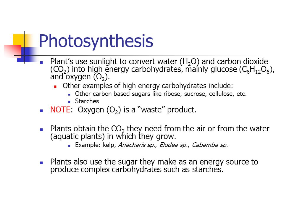 Photosynthesis Plants use sunlight to convert water (H 2 O) and carbon dioxide (CO 2 ) into high energy carbohydrates, mainly glucose (C 6 H 12 O 6 ), and oxygen (O 2 ).