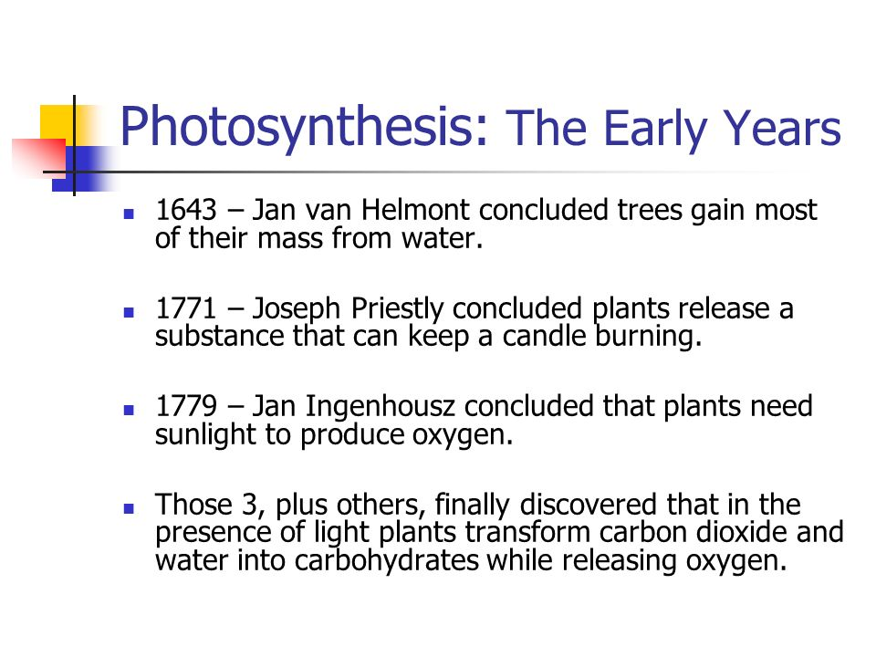 Photosynthesis: The Early Years 1643 – Jan van Helmont concluded trees gain most of their mass from water.