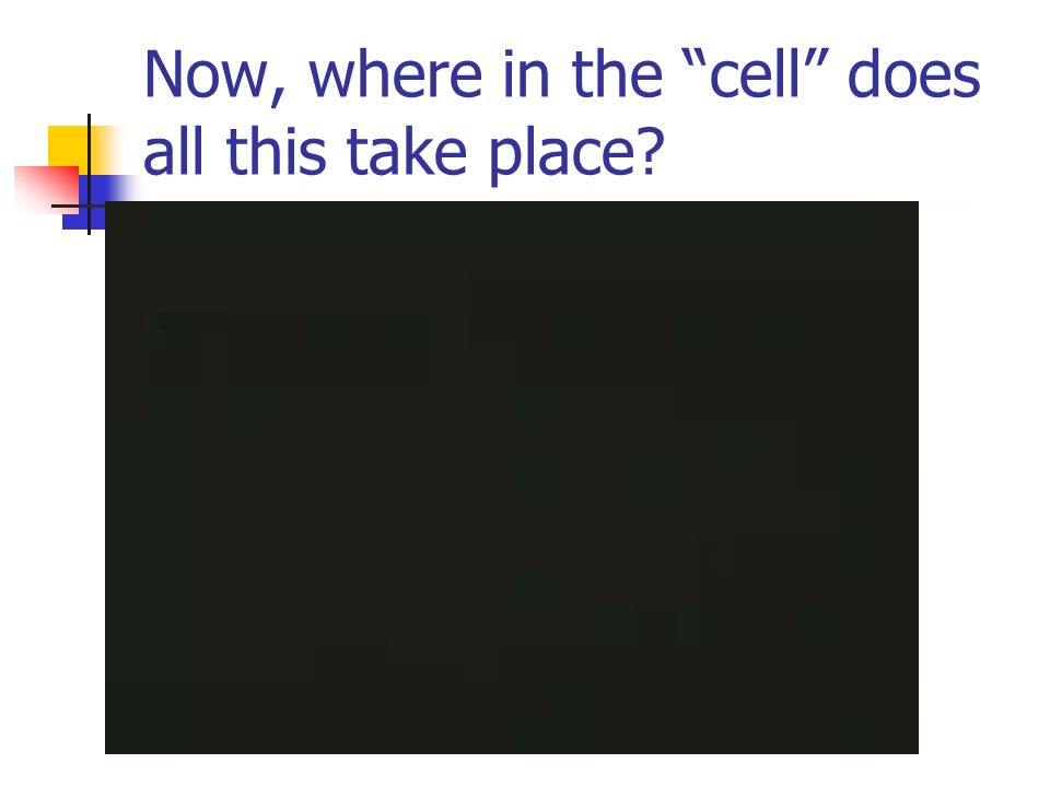 Now, where in the cell does all this take place