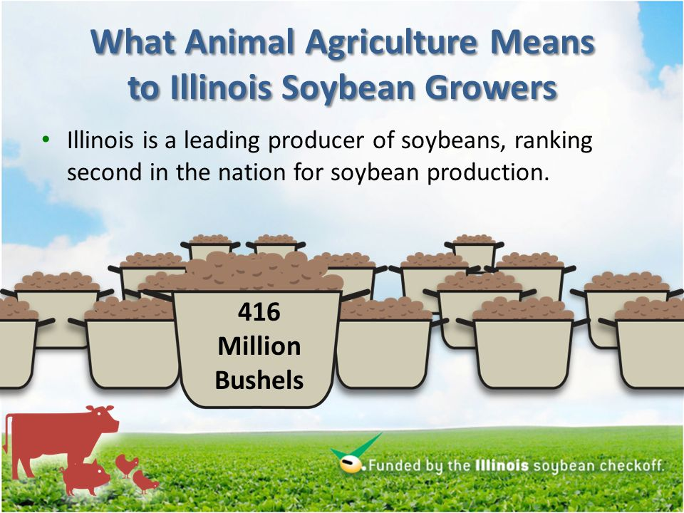 What Animal Agriculture Means to Illinois Soybean Growers Illinois is a leading producer of soybeans, ranking second in the nation for soybean production.