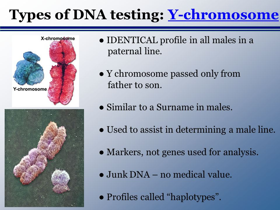 Types of DNA testing: Y-chromosome IDENTICAL profile in all males in a paternal line.