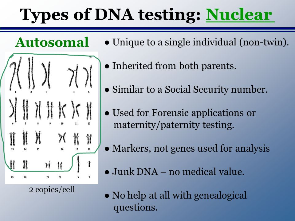 Types of DNA testing: Nuclear Unique to a single individual (non-twin).
