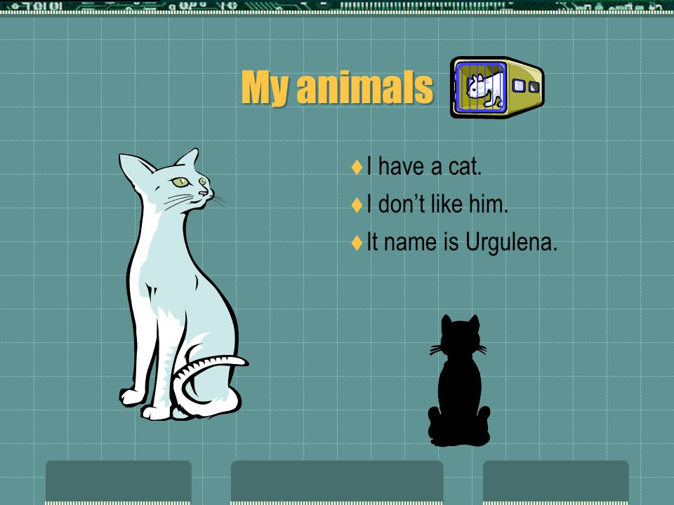 My animals I have a cat. I dont like him. It name is Urgulena.