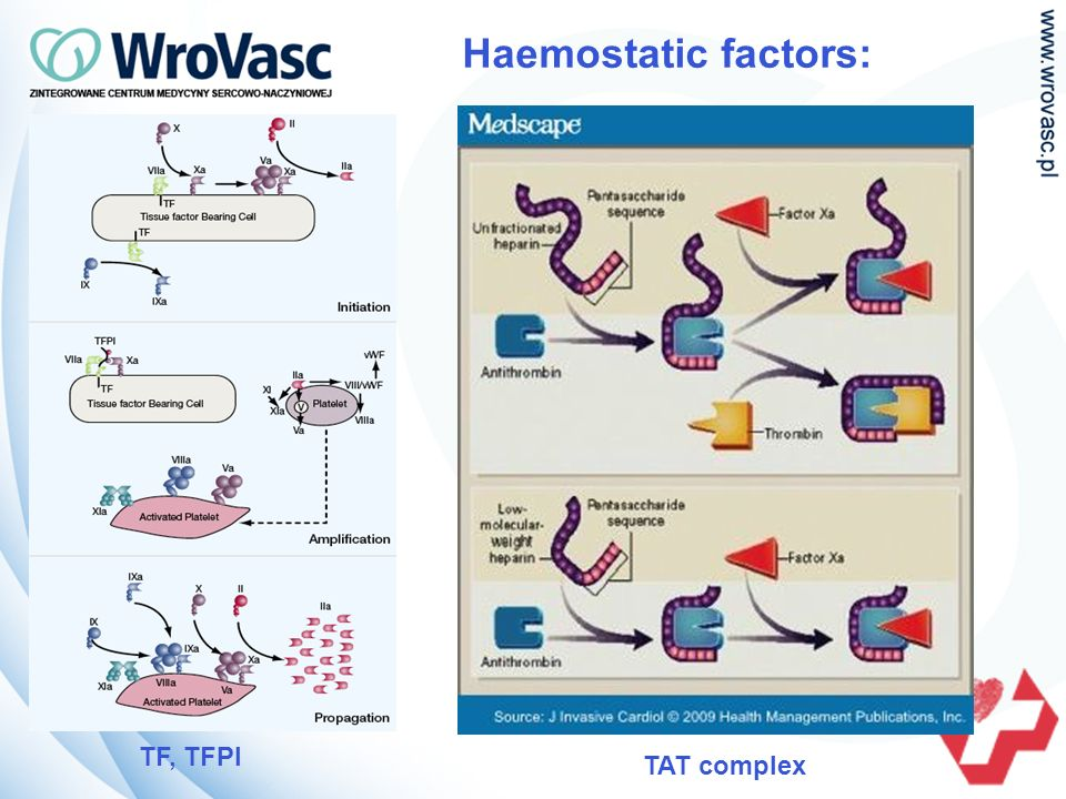 Haemostatic factors: TF, TFPI TAT complex
