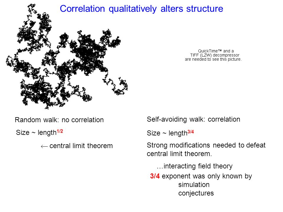 Correlation qualitatively alters structure Random walk: no correlation Self-avoiding walk: correlation Size ~ length 1/2 Size ~ length 3/4 central limit theorem Strong modifications needed to defeat central limit theorem.